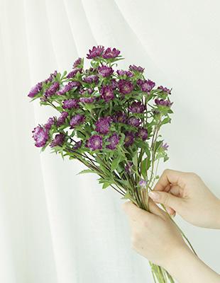 소박해서 더 예쁜 과꽃