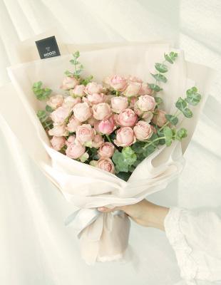 분홍빛 자나장미