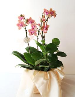 개업 생신 축하 꽃선물